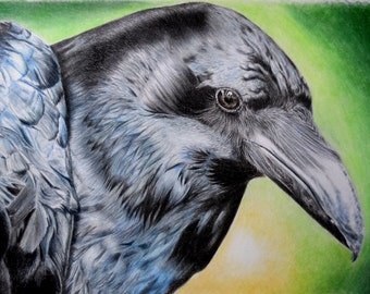 Colour raven print