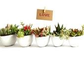 Succulent Favors 'Little Love Boat Fleet' Set of 8