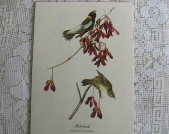 Bobolink, Vintage Audobon Bird Print, Vintage Wall Art, Home / Wall Decor, Vintage Bird, James Audobon Bird