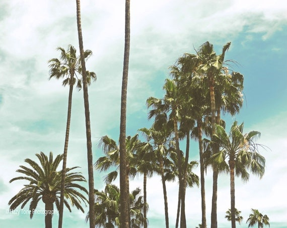 palm trees art photography print beach wall decor. Black Bedroom Furniture Sets. Home Design Ideas