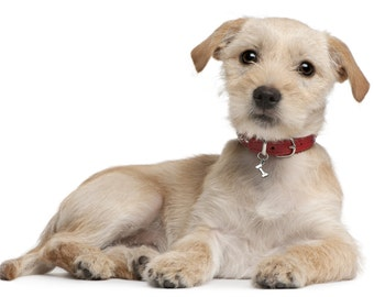 Dog Bling with Dog Bone, Dog Bone Dog Collar Accessory, Dog Collar Charm, Pet Jewelry, 460