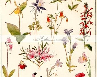 Digital Download Printable Art - Wild Flowers Botanical Study Variety Floral Vintage Illustration - Paper Crafts Scrapbook Altered Art