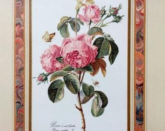 Set of 4 - Vintage UNFRAMED Botanical Bookplate Engraving, Botanical Art Prints by Gerard Van Spaendonck, Flowers, Redoute, Rose, Botany