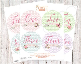 The Chloe | Floral Banner 12 Monthly Onsie Baby Girl Growth Stickers