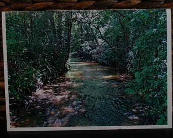 Creek Photo #2 greeting card