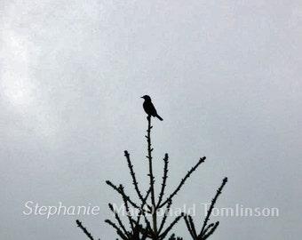 Bird On Tree Photo Fine Art Photograph - Nature Photograph