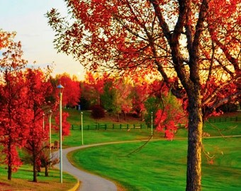 Fine Art Print Red Autumn Tree Sunset Photo