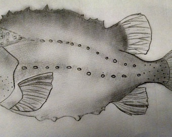 Hand Drawn Fish and Other Marine Life