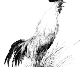 Rooster drawing, original sketch art, farm birds,  country style wall art, rustic home, chicken picture, pen and ink sketches, kitchen decor