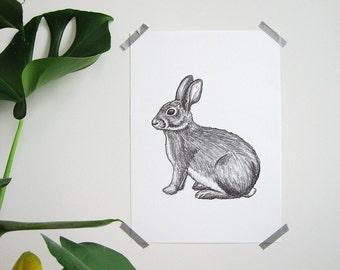 Hand-drawn rabbit A4 poster-hand drawn bunny print