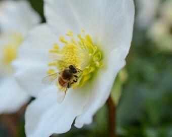 White Flower & Bee #226