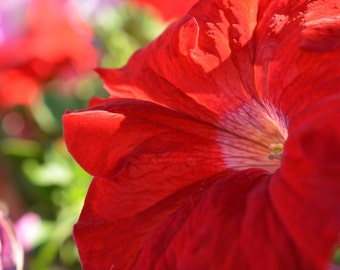Beautiful In Red Flower Photograph #242