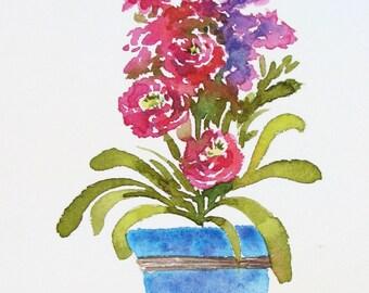 Pink Stock Flowers in blue garden pot