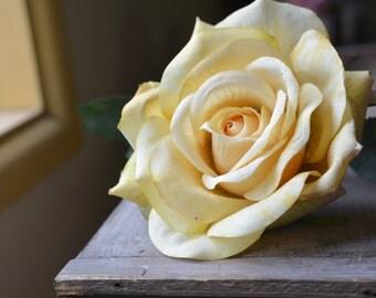 Belle Rose in apricot -ITEM038