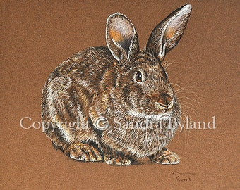 BUNNY DRAWING Fine Art Print Rabbit Drawing Bunny Art Rabbit Art from Signed Giclee Print from Original by Sandra Byland