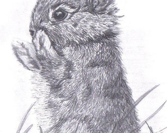 BABY Bunny Rabbit Limited Edition art drawing print signed by UK artist