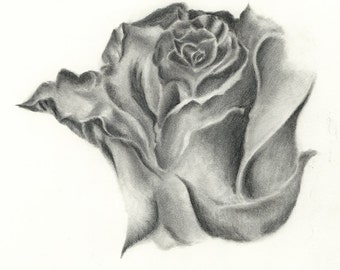 Rose Drawing. Print of pencil drawing.