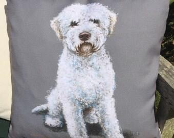 Lagotto Romagnolo White Dog