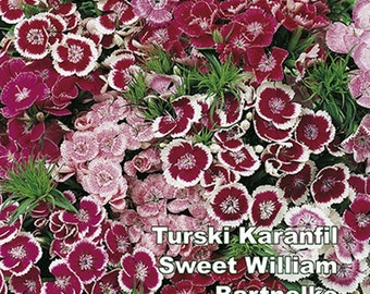 Sweet William. Flower seeds, from Serbia. FREE SHIPPING
