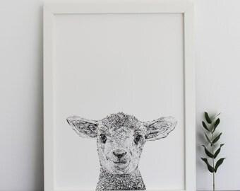 Lamb Print
