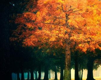 Fall Tree Photography, Colorful Tree Photo, Nature Photography, Fall Foliage, Autumn Decor, Orange Leaves, Tree, Fine Art Photography