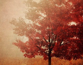 Fine Art Photograph, Trees, Woods, Red, Maryland, Fall, Autumn, November, Woodland, Nature Art, Rural, Countryside, Home Decor, 4x6 Print