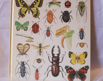 Yukihisa Kuwagata, Japanese Butterflies and Insects in Full Color, Bug Book