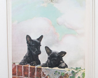 Vintage Dog Print Scotch Terrier Puppies Diana Thorne Color Illustration Book Plate