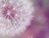 dandelion art, white flower, nursery art, nursery decor, pastel wall art, pastel photo, pink flower art, dandelion photo, dandelion print