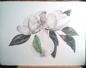 "Pen Drawing Magnolia Flower Scribbling Scumbling Cross Hatching 22"" x 30"" READY to SHIP"