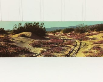 Southwestern Desert Panorama Postcard, Verbena on the Desert Petley Oversize 11 inch Unused Postcard