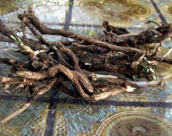Chicory root - raw fresh unprocessed whole from Southern Oregon - wildcrafted no fertilizers or pesticides small farm sustainable oz ounce