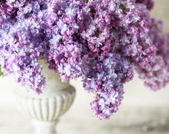 Floral Photography - Double Lilac Bouquet, Fine Art Photograph, Floral Wall Art, Botanical Wall Decor