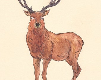 SALE Original Drawing of a Deer in Watercolour on Yellow Card A4