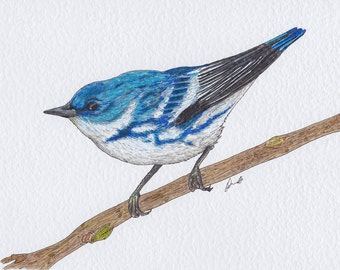 Original Drawing of Small Blue and White Cerulean Warbler Bird on Branch A4
