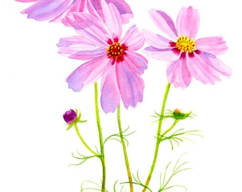 Pink Cosmos, Watercolor Art, Watercolor Painting, Floral Painting, Floral Watercolor, Floral Illustration, Original Painting, Pink Flowers