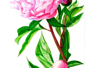 Pink peony,watercolor art, original watercolor, blossom, flowers, pink blossoms, peonies, watercolor painting, floral watercolor, original