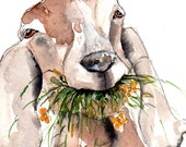 Hungry Goat Illustration Painting - Lunchtime Snack - Watercolor Art -6x4 Print set in 8x6 mount- goat, farm, animal,modern,art, painting