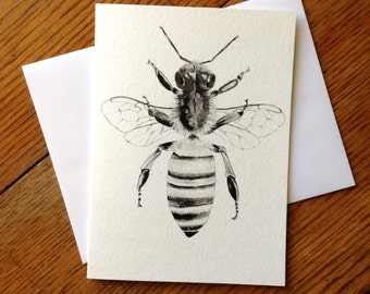 Bee, Honeybee, Insect, 5 x 7 Black and White Illustrated Blank Card, Entomology