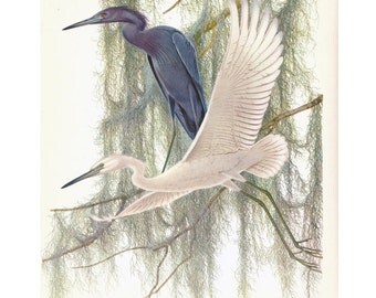 Herons Print by Menaboni Book Plate SALE Buy 3, get 1 Free