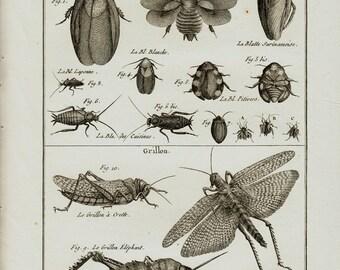 1793 Large Antique INSECT engraving, Beettle, grasshopper, cricket,Panckoucke. Lamarck, Entomology. 222 years old