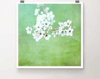 Sakura - FineArtPrint of Cherry Blossoms Spring white green Textures