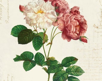 Vintage Botanical Floral on French Ephemera Print, Vintage Rose Print 8x10 P311