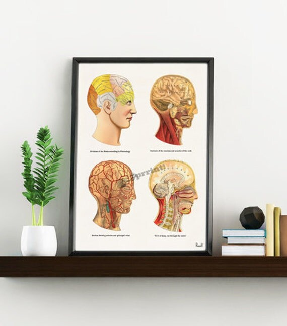 Anatomical head study Art collage Gift for science student. Wall decor- Doctors gift Human Anatomy wall art print SKA200WA4