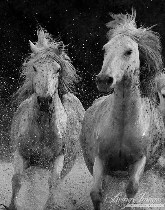 Camargue Spray - Fine Art Horse Photograph - Horse - Camargue - Horse -Fine Art Print - Photograph