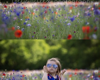 Digital Background  Red, White, Blue Flower field -  Eliz Alex-  Instant Download, composite, stock