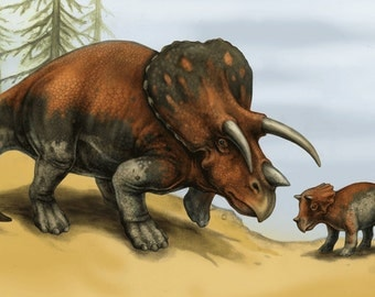 "Triceratops and Young 8.5""x11"" print"