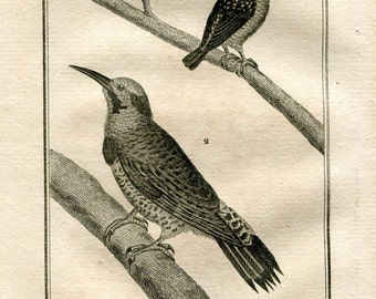 1803  Woodpeckers Antique Bird Print, Ornithology, Original Engraving  from Buffon Natural History