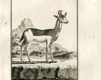 1811 Antique Print Le Nanguer Antelope Authentic 200 Years Old Copper Engraving, Buffon
