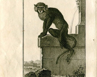 1800s Antique Animal Print Moustached Monkey  French Engraving Buffon Apes
